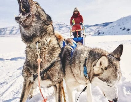 best-park-city-activity-luna-lobos-dog-sledding