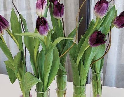 park-city-florist-tulip-flowers-by-you
