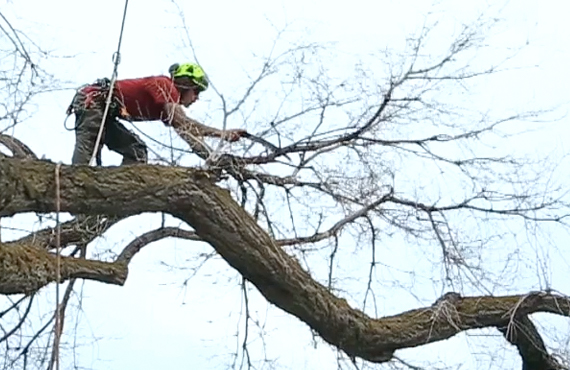 wasatch-arborists-park-city-landscaping