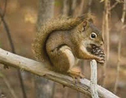 pest-elimination-park-city-squirrel-removal
