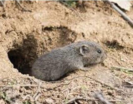 pest-elimination-park-city-vole-removal