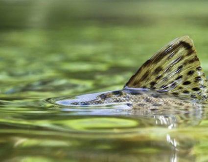 flyfishingprovoparkcity
