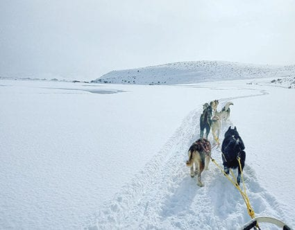 park-city-utah-luna-lobos-dog-sledding